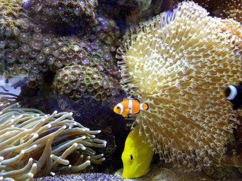 神秘的海底世界